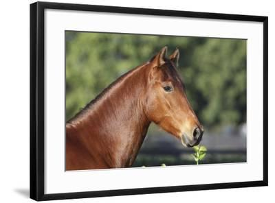 Andalusian 057-Bob Langrish-Framed Photographic Print