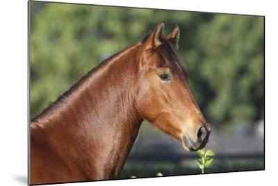 Andalusian 057-Bob Langrish-Mounted Photographic Print