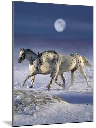 Dream Horses 055-Bob Langrish-Mounted Photographic Print