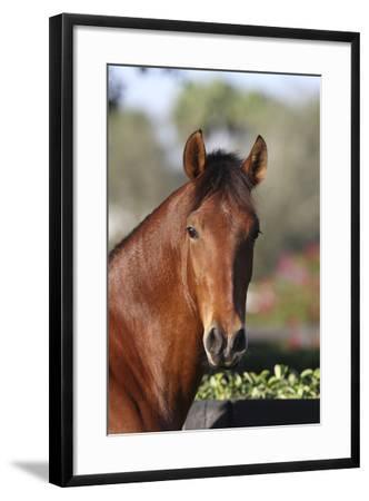 Andalusian 059-Bob Langrish-Framed Photographic Print