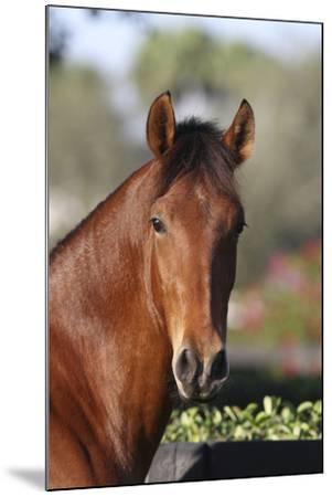 Andalusian 059-Bob Langrish-Mounted Photographic Print