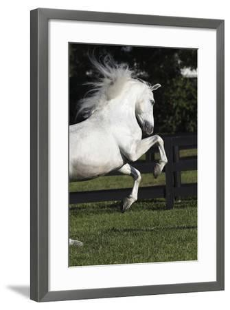Andalusian 063-Bob Langrish-Framed Photographic Print