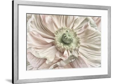 Pink Poppy-Cora Niele-Framed Photographic Print