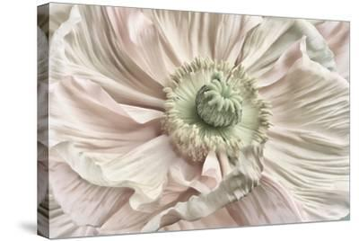 Pink Poppy-Cora Niele-Stretched Canvas Print