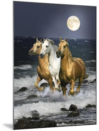 Dream Horses 068-Bob Langrish-Mounted Photographic Print