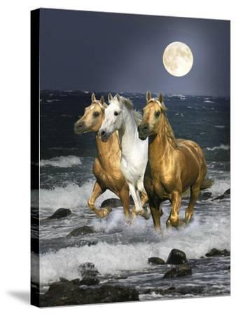 Dream Horses 068-Bob Langrish-Stretched Canvas Print