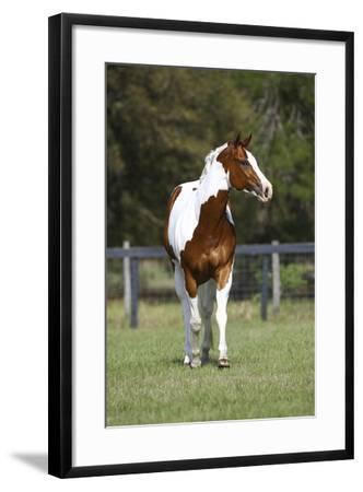 Painted 031-Bob Langrish-Framed Photographic Print