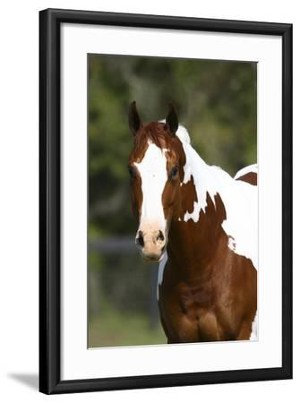 Painted 034-Bob Langrish-Framed Photographic Print