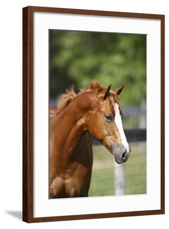 Painted 040-Bob Langrish-Framed Photographic Print