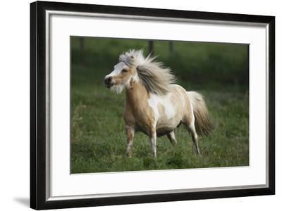 Painted Feather Farm-Bob Langrish-Framed Photographic Print