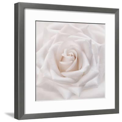 Soft White Rose-Cora Niele-Framed Photographic Print