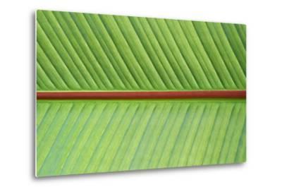 Leaf Texture V-Cora Niele-Metal Print