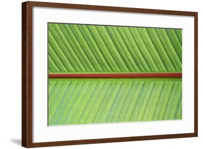 Leaf Texture V-Cora Niele-Framed Photographic Print