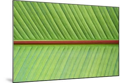 Leaf Texture V-Cora Niele-Mounted Photographic Print