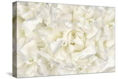 White Peony Flower-Cora Niele-Stretched Canvas Print