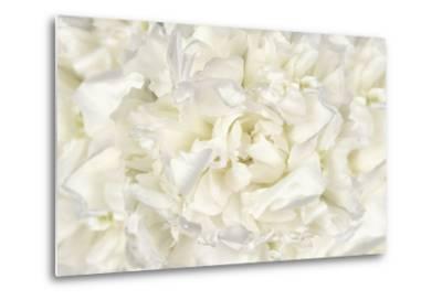 White Peony Flower-Cora Niele-Metal Print