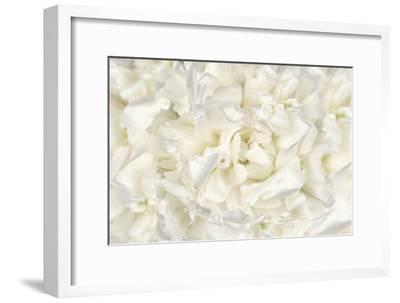 White Peony Flower-Cora Niele-Framed Photographic Print