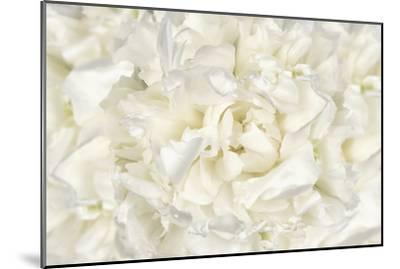 White Peony Flower-Cora Niele-Mounted Photographic Print
