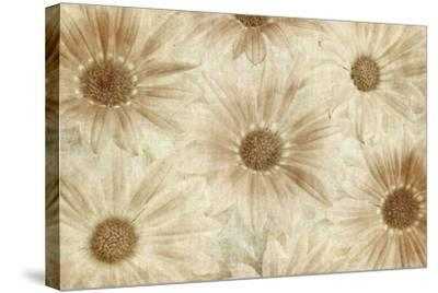 Vintage Daisies-Cora Niele-Stretched Canvas Print