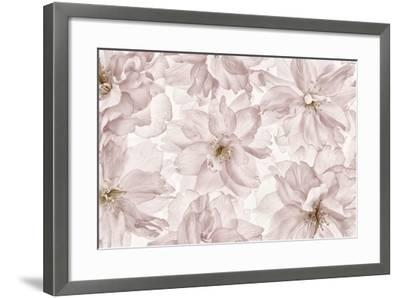 Translucent Cherry Blossom-Cora Niele-Framed Photographic Print