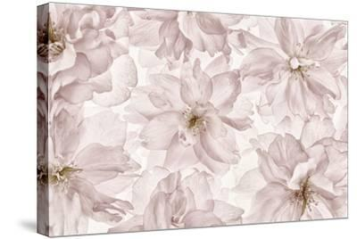 Translucent Cherry Blossom-Cora Niele-Stretched Canvas Print