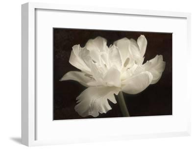 White Tulip II-Cora Niele-Framed Photographic Print