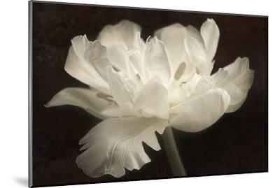 White Tulip II-Cora Niele-Mounted Photographic Print