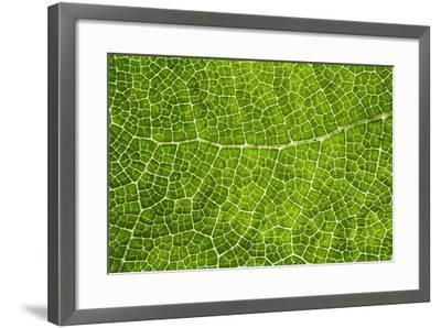 Green Leaf Texture-Cora Niele-Framed Photographic Print