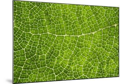 Green Leaf Texture-Cora Niele-Mounted Photographic Print