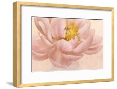 Pink Peony-Cora Niele-Framed Photographic Print
