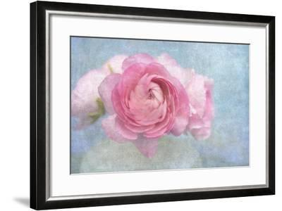 Pink Persian Buttercup Still Life-Cora Niele-Framed Photographic Print