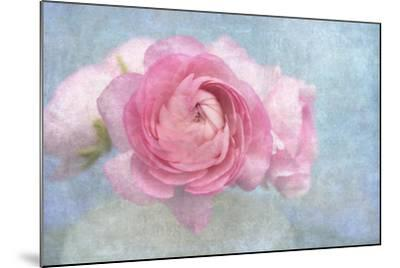 Pink Persian Buttercup Still Life-Cora Niele-Mounted Photographic Print