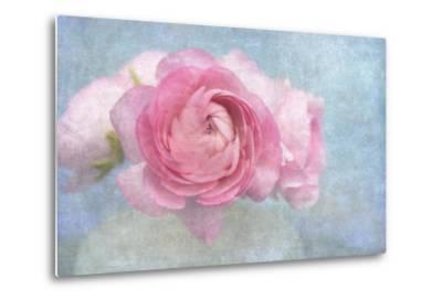 Pink Persian Buttercup Still Life-Cora Niele-Metal Print