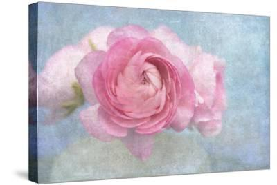 Pink Persian Buttercup Still Life-Cora Niele-Stretched Canvas Print