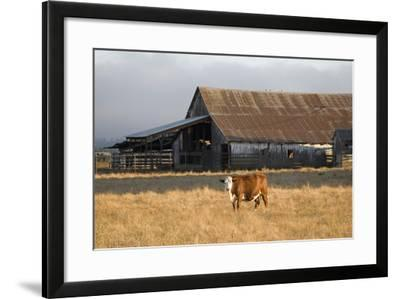 Cow Portrait-Lance Kuehne-Framed Photographic Print