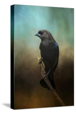Lazy Bird-Jai Johnson-Stretched Canvas Print