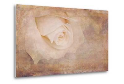 Vintage Rose Card-Cora Niele-Metal Print
