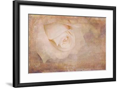 Vintage Rose Card-Cora Niele-Framed Photographic Print