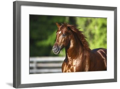 Mercurio 004-Bob Langrish-Framed Photographic Print