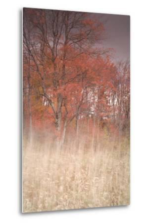Trees on Wind 1-Moises Levy-Metal Print