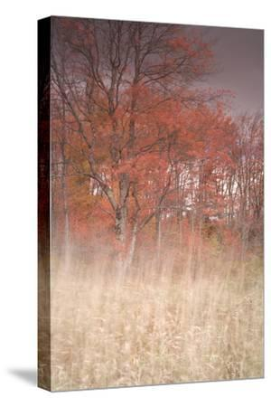 Trees on Wind 1-Moises Levy-Stretched Canvas Print