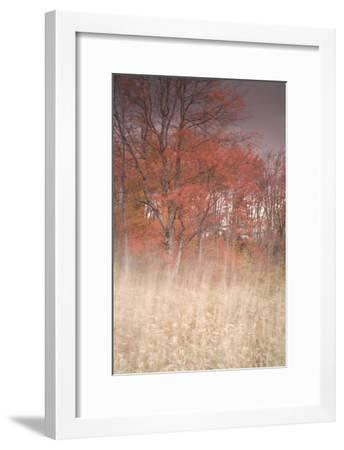 Trees on Wind 1-Moises Levy-Framed Photographic Print