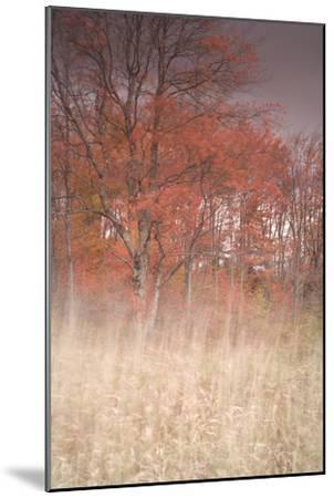 Trees on Wind 1-Moises Levy-Mounted Photographic Print