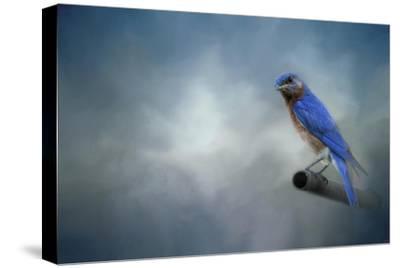 Bluebird on Patrol-Jai Johnson-Stretched Canvas Print