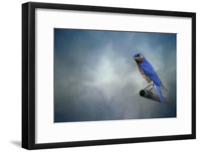Bluebird on Patrol-Jai Johnson-Framed Giclee Print