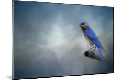 Bluebird on Patrol-Jai Johnson-Mounted Giclee Print