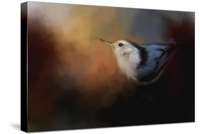 Nuthatch in Autumn-Jai Johnson-Stretched Canvas Print