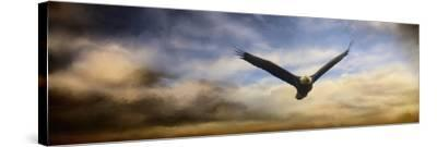 Sunset Flight-Jai Johnson-Stretched Canvas Print