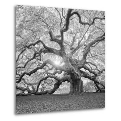The Tree Square-BW 2-Moises Levy-Metal Print
