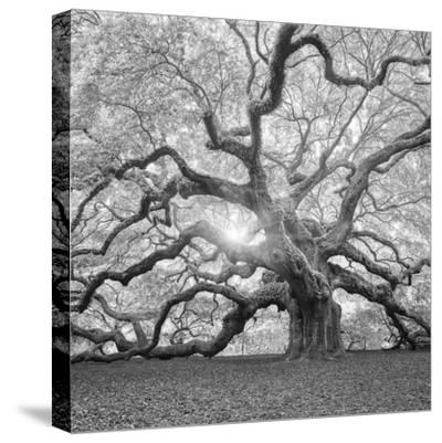 The Tree Square-BW 2-Moises Levy-Stretched Canvas Print